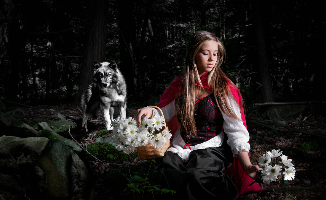 Little Red Riding Hood picking flowers in the forest. A wolf is sneeking up behind her. Fashion photography